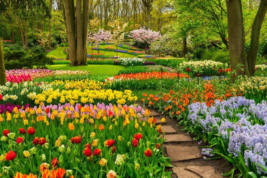 garden and landscape
