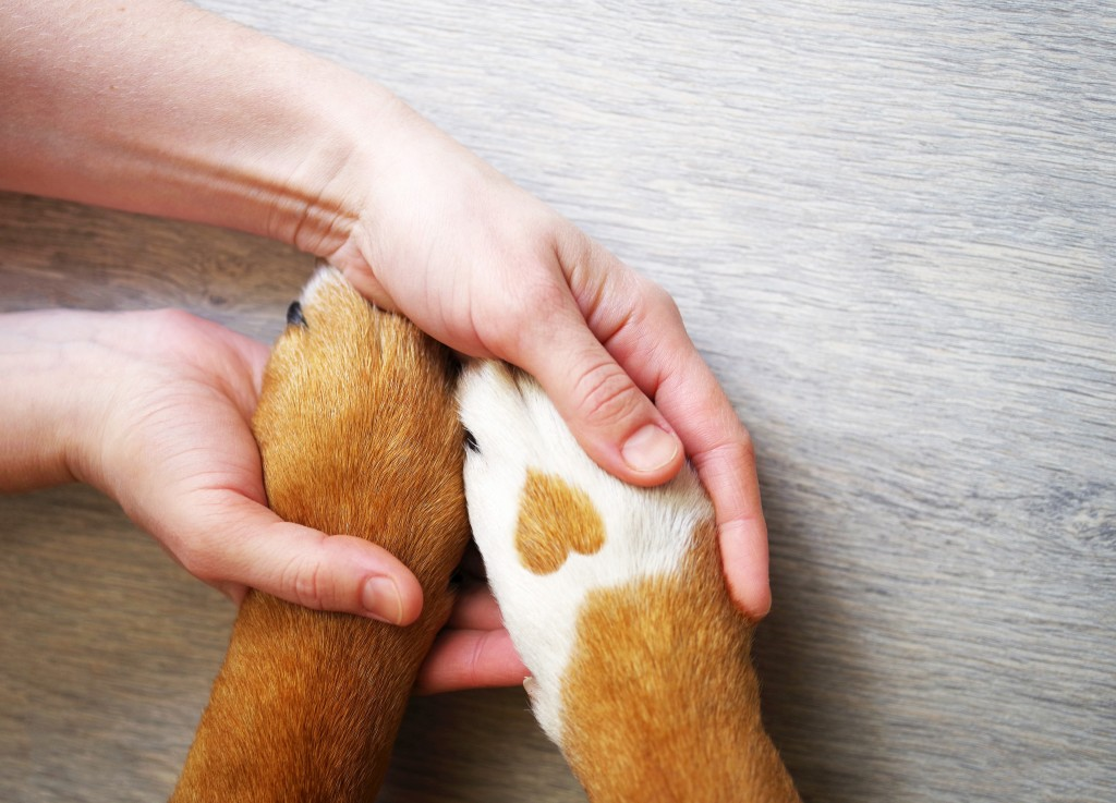 person holding hands with pet